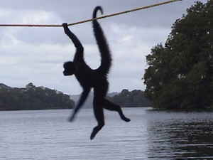 image: monkey_river 
