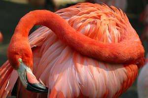 image: flamingo2