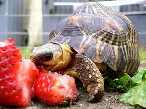 Tortoise aha7.com_ppp-de _wymf-nutra-de.htm